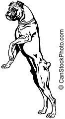 boxer dog black white - dog boxer breed, black and white...