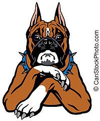 boxer dog - dog boxer breed, front view illustration...