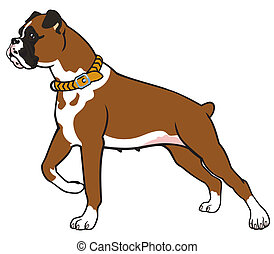 boxer dog side view image isolated on white background