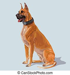 boxer hund, sitzen