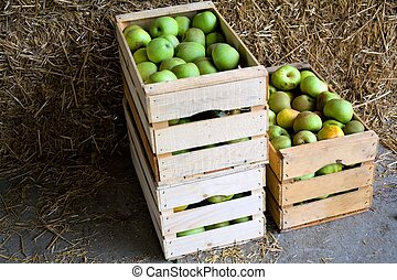 Boxes with apples