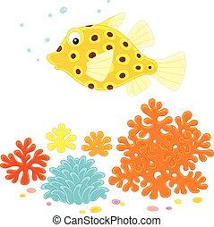 boxfish, żółty