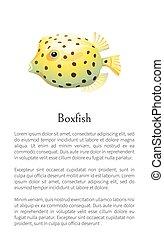 Boxfish Animal Poster Set Vector Illustration - Boxfish...