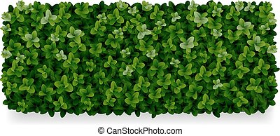 boxwood decorative fence - rectangular boxwood shrubs, green...