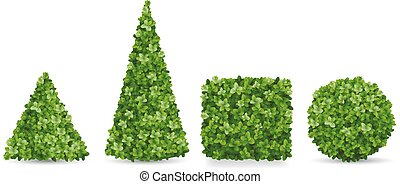 Boxwood shrubs of different topiary