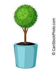 Boxwood topiary garden plant. Decorative tree in flowerpot.