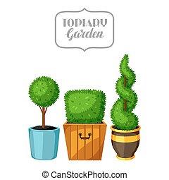 Boxwood topiary garden plants. Decorative trees in ...