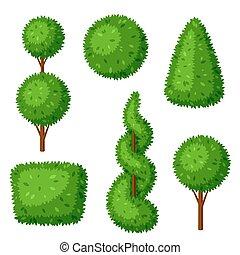 Boxwood topiary garden plants. Set of decorative trees.