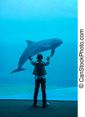 boy and dolphin in oceanarium