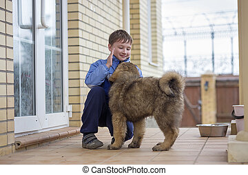 Boy and puppy Tibetan Mastiff