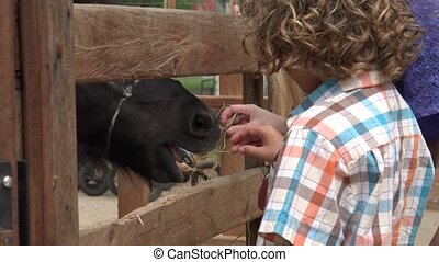 Boy And Sister Feeding Horse
