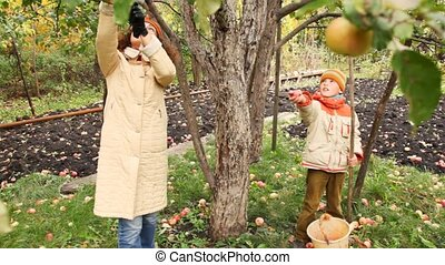 boy and woman pick with stick apple from apple-tree