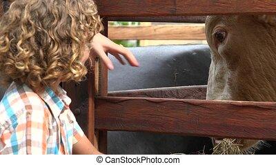 Boy At Cattle Farm