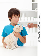 Boy at the veterinary doctor with his little doggy