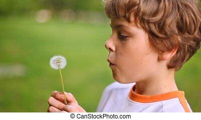 Boy blows on white dandelion playing on green lawn