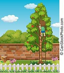 Boy climbing apple tree
