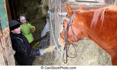 Boy feed horse, his sister give hay to horse