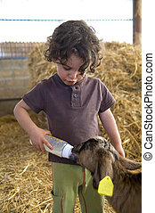 boyb feeding baby goat with baby bottle in a farm