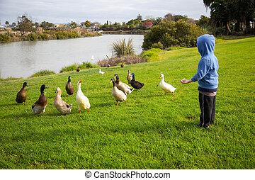 Boy feeding ducks.