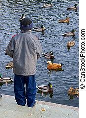 Boy feeds ducks