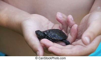 Boy Holding a Small Turtle in the Palm of your Hand that...