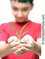 boy holding plant in hands