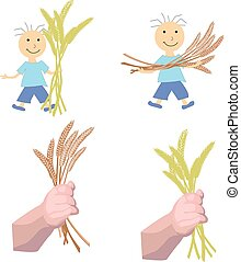 boy holds ears of wheat in hands