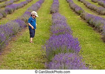 Boy in a lavender field