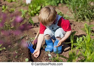Boy in the vegetable garden - Boy is putting seeds in the...