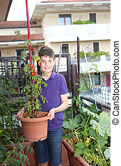 boy in urban garden with tomatoes in the pot