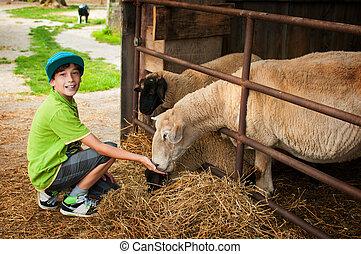 boy petting sheep