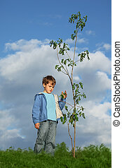 boy plants the tree