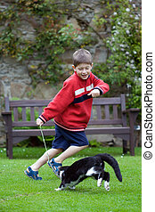 Boy playing with his pet cat - Young boy laughing and...
