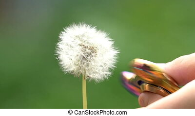 Boy playing with spinner and dandelion.