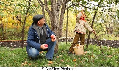boy removes stick apple from apple-tree, grandfather nearby keep apples