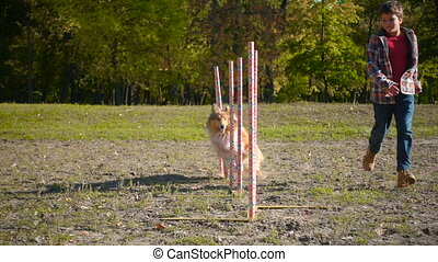 boy running with collie dog at slalom agility training -...