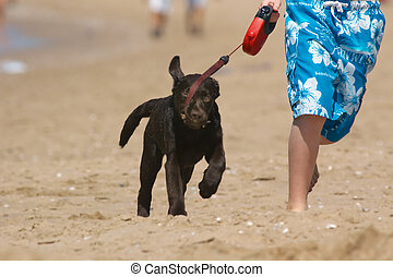 boy running with puppy
