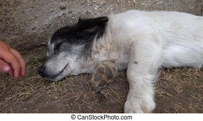 Boy stroking hand stray dog mongrel. Animal care