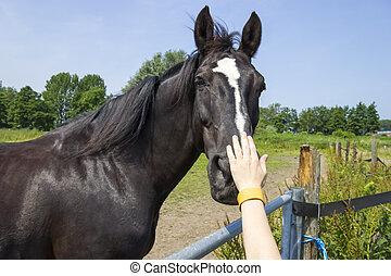 Boy stroking horse