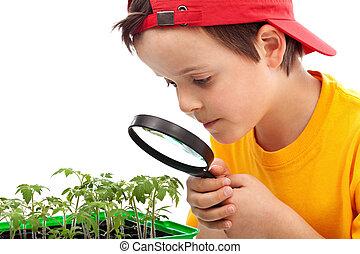 Boy studies young plants