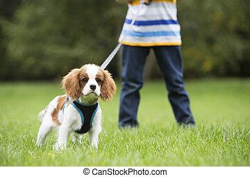 Boy Taking Puppy For Walk On Lead
