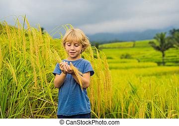 Boy traveler on Beautiful Jatiluwih Rice Terraces against ...