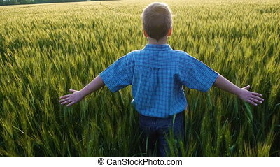 Boy walking on green wheat field and touching the ears