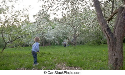Boy Wandering among Blooming Trees - Steadicam slow motion...