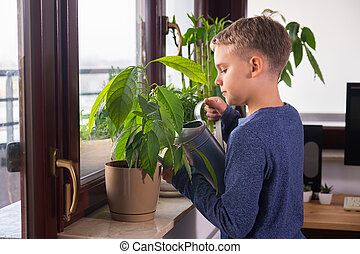 Boy watering houseplants on the windowsill at home. Child helps with household chores.