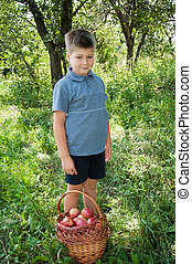 Boy with a basket of red apples in the garden