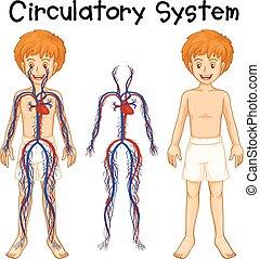 Boy with circulatory system