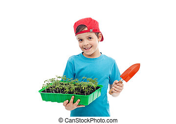 Boy with tomato seedlings in tray and small gardening spade
