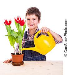 Boyl care flowers in pot