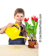 Boyl care red tulips in pot
